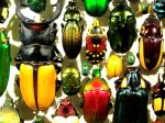 Colorful beetles look like jewels at Insectarium Montreal Botanical Garden - Quebec