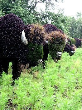 Bison – Mosaiculture Montreal Botanical Garden