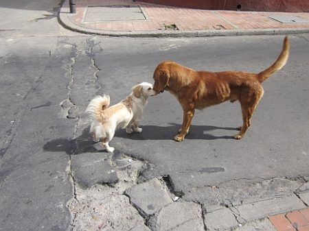 Four Legged Friends in Bogotá