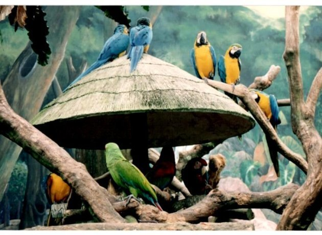 Colorful Parrots at Jurong Bird Park in Singapore