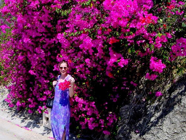 Huatulco Oaxaca Mexico Bougainvillea