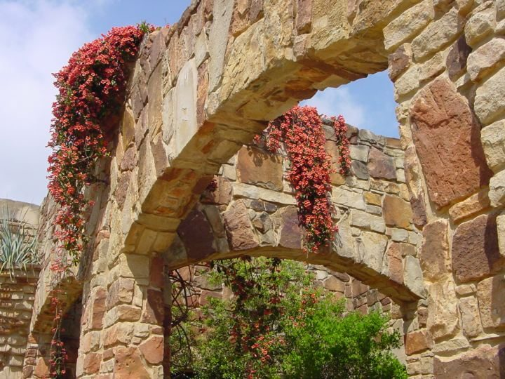 Crossvine decorate the stonework at the entrance of the Lady Bird Johnson Wildflower Center in Austin TX