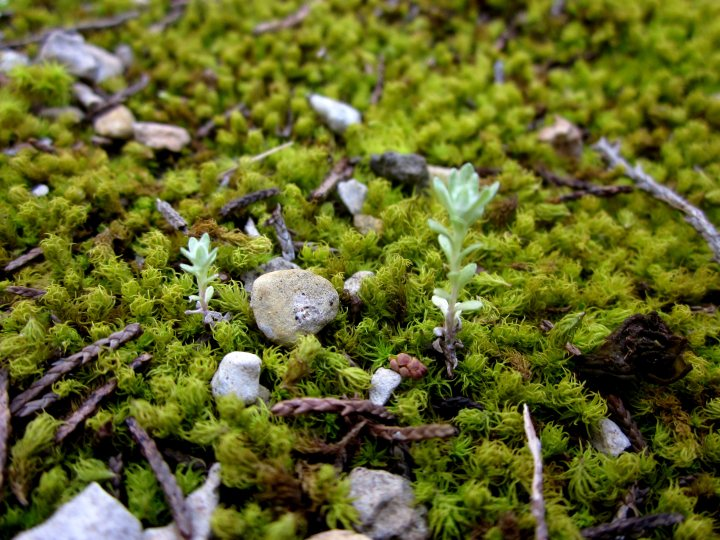 Tiny landscape of moss - St Edwards Park in NW Austin