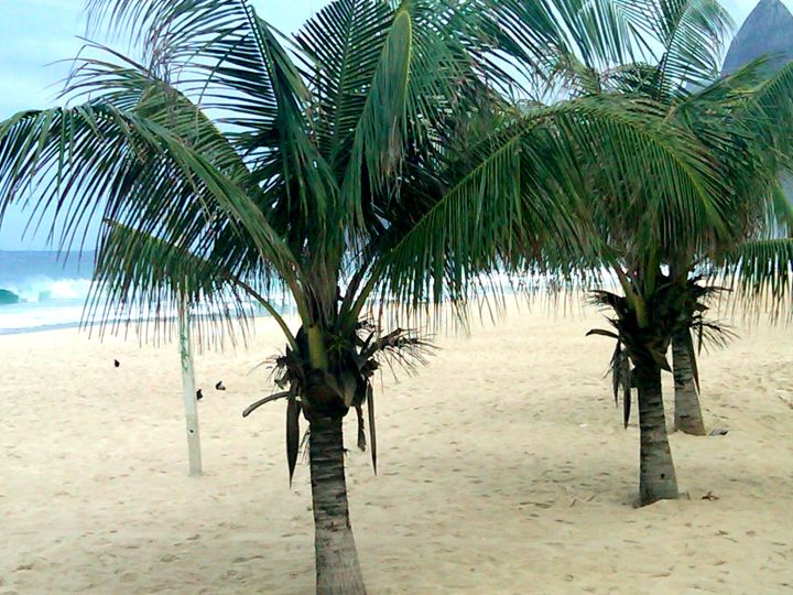 Palm trees along 4km Copacabana beach in Rio de Janeiro Brazil
