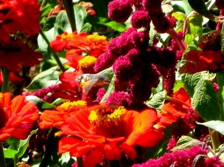 Beautiful flowers and hummingbird moth at Temmeni Hill in Urgup - Central Anatolia Turkey
