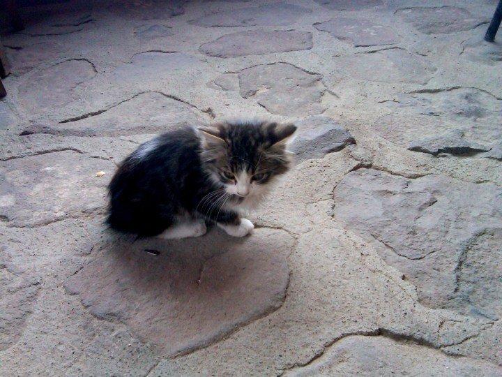 Kitten of Dedeli Hotel in Urgup - tourist center to Cappadocia in Central Anatolia Region