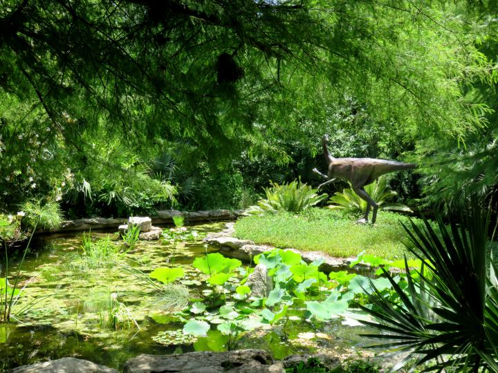 Hartman Prehistoric Garden At Zilker Botanical Garden In Central Austin TX    Zilker Metropolitan Park