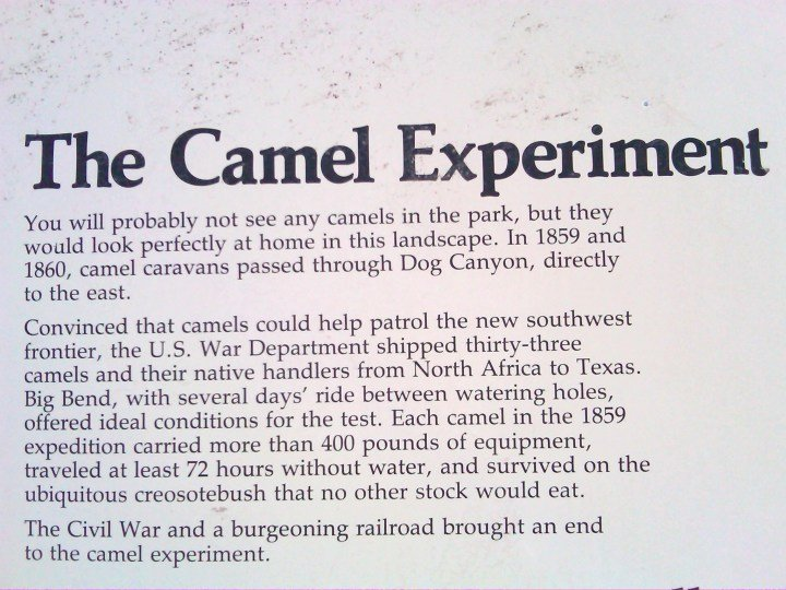 The Camel Experiment at Big Bend National Park in Southwestern Texas near Mexico border