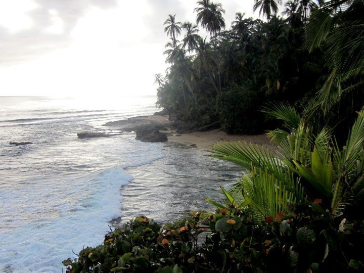 Rainforest jungle right up to the beach - Manzanillo Costa Rica - Caribbean coast paradise