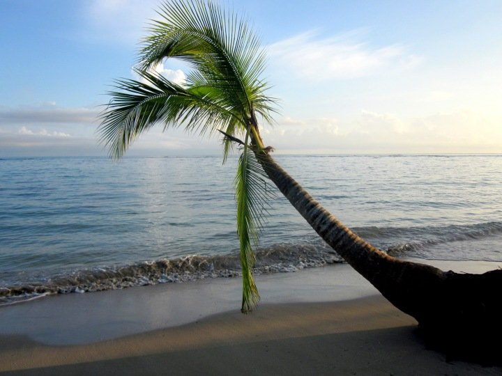 Palm tree on the beach of Manzanillo Costa Rica - tropical paradise on the Caribbean coast near Panama