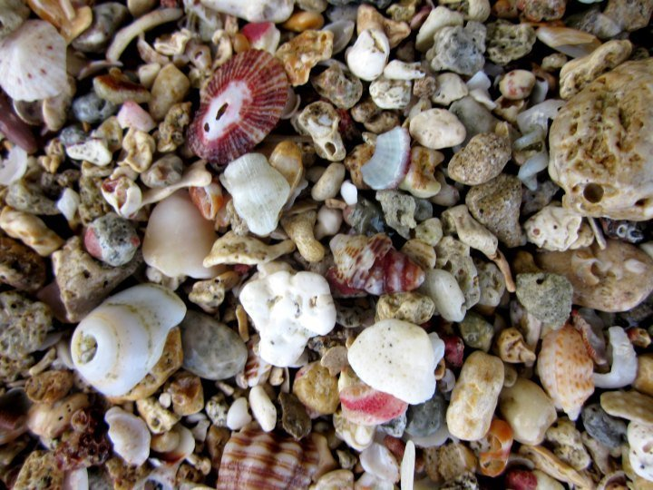 Sea shells along the beach of Manzanillo - Costa Rica Caribbean coast with rainforest, howler monkeys, exotic birds, snorkeling