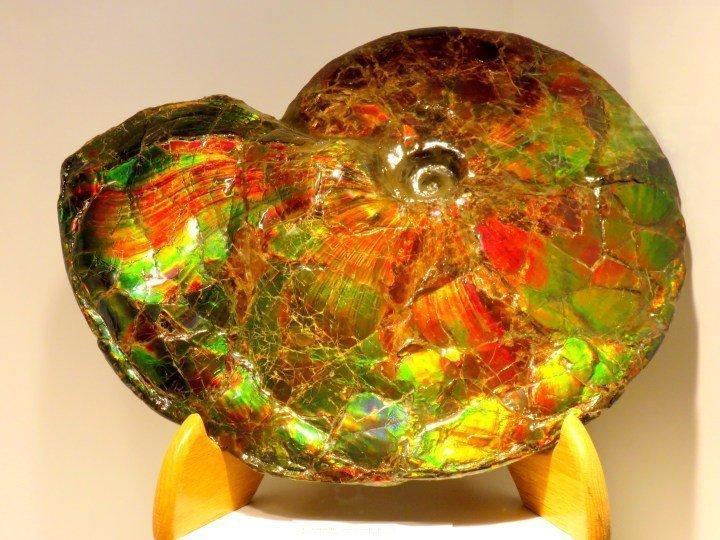Aragonite mineral - ammonite mollusks - ammolite gem of Southern Alberta