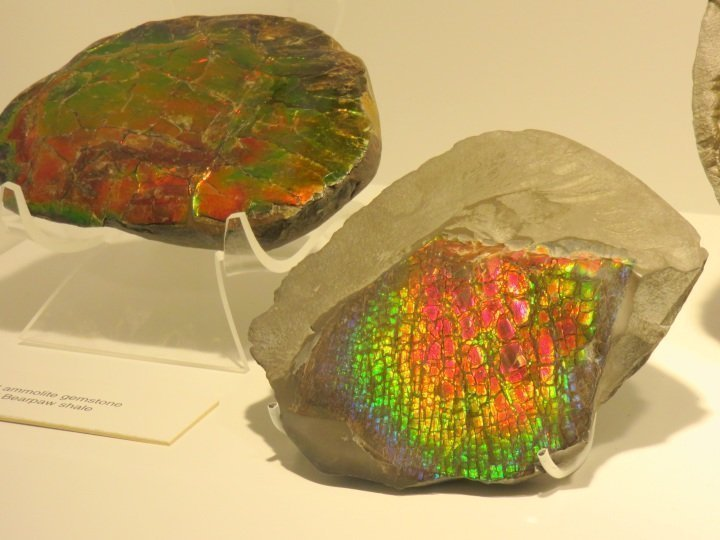 Ammolite stone from fossilized ammonite shells - Glenbow Museum in downtown Calgary Alberta