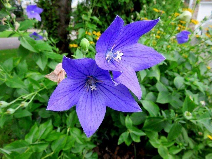 Flowers along Dows Lake shoreline in Ottawa Canada - popular for canoeing and kayaking in summertime