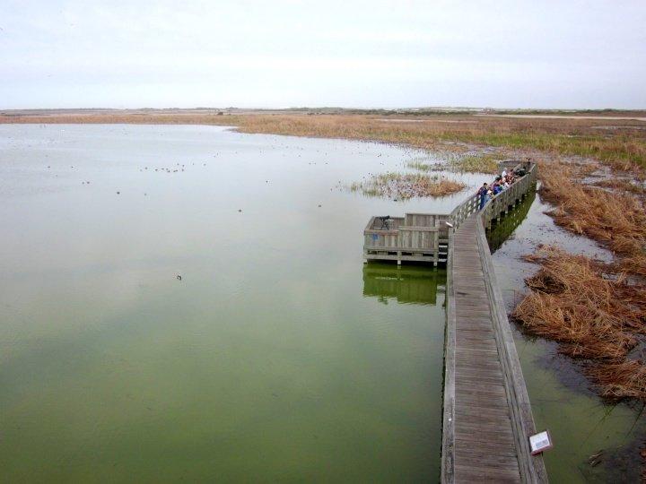 Bird sanctuary - Port Aransas Leonabelle Turnbull Birding Center - Texas Gulf Coast