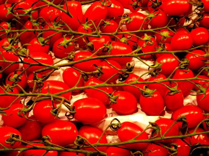 Fresh tomatoes on the vine at La Boqueria Market Barcelona Las Ramblas district