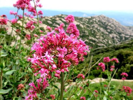 Montserrat Spain – Wildflowers Along the Hiking Trails