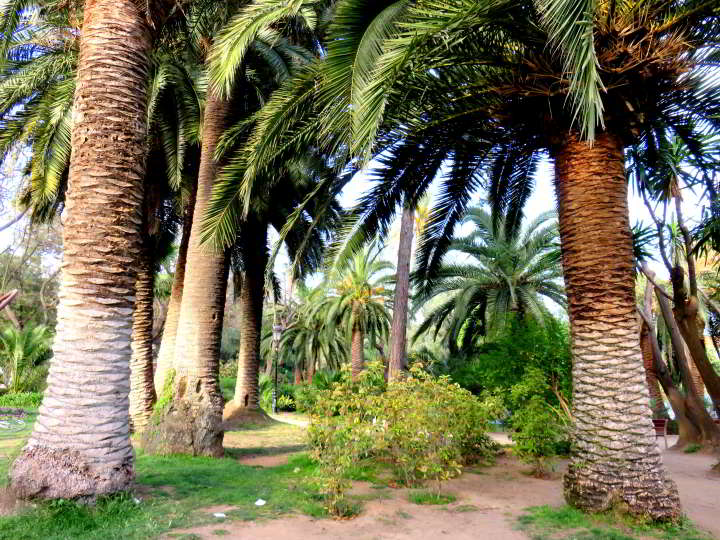 Barcelona Park Ciutadella palm trees - enjoy a day in the park