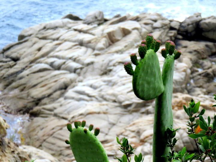 Costa Brava hiking trails - cactus and other succulents are common