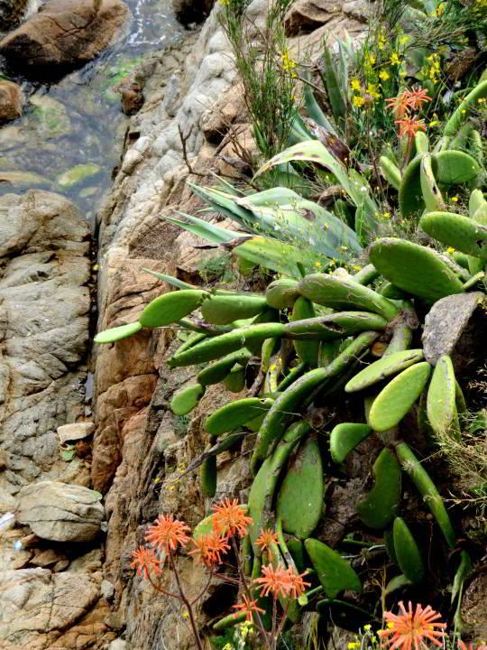 Hiking Costa Brava Catalunya - wildflowers along the foot path