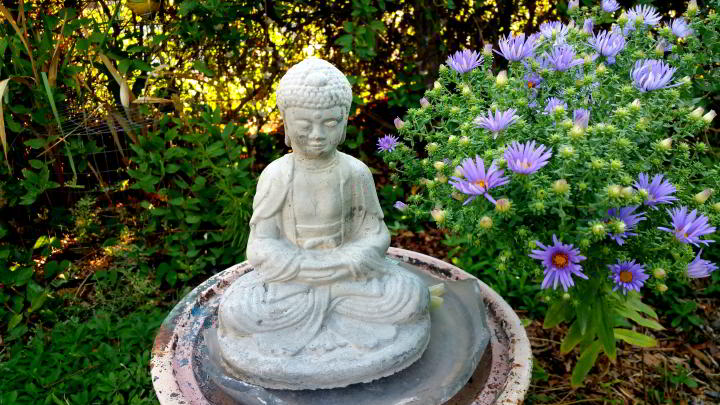 A statue of a seated Buddha in meditation next to bunches of purple mums blooming