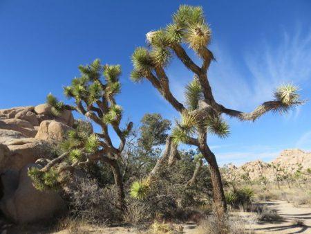 Palm Springs Day Trip – Joshua Tree National Park
