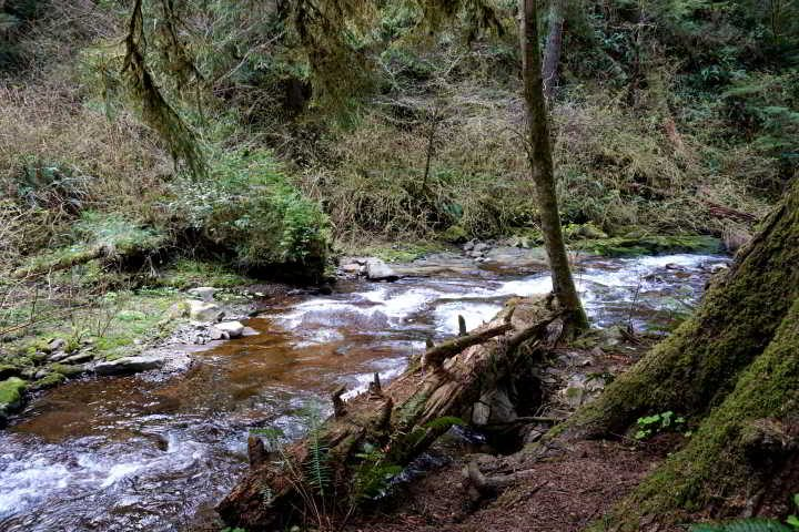 Necarney Creek - along the trail to the beach - Pacific coast Oregon
