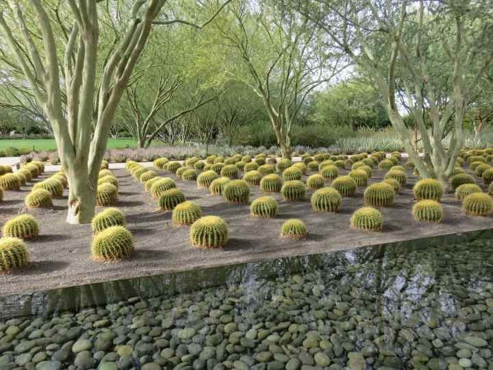 Cactus and water feature at Sunnylands garden near Palm Springs