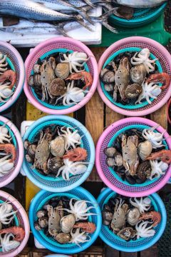 Fresh seafood displayed in colorful baskets at Jaqalchi Market in Busan South Korea