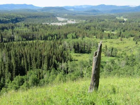 Fullerton Loop Hiking Trail near Bragg Creek Alberta