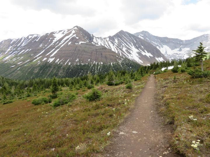 Flat portion of Ptarmigan Cirque trail in Kananaskis Country AB Canada