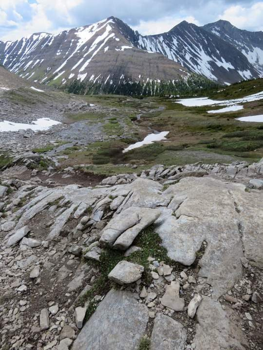 Rocky Mountain view from alpine meadow of Ptarmigan Cirque trail in Alberta Canada