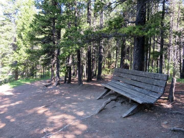 Shaded bench at Fullerton Loop trail