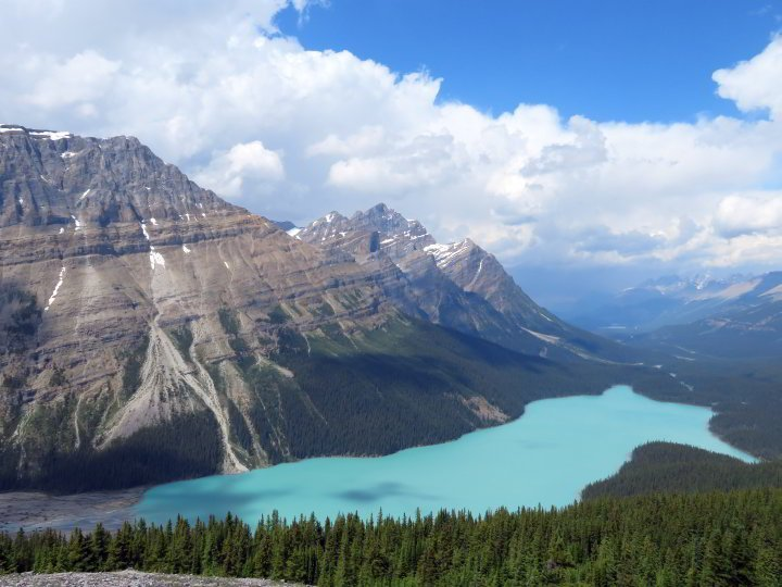 Peyto Lake, shaped like a fox and stunning turquoise in color, is one of the most popular stops on the Icefields Parkway Hwy 93 in the Canadian Rockies of Alberta Canada