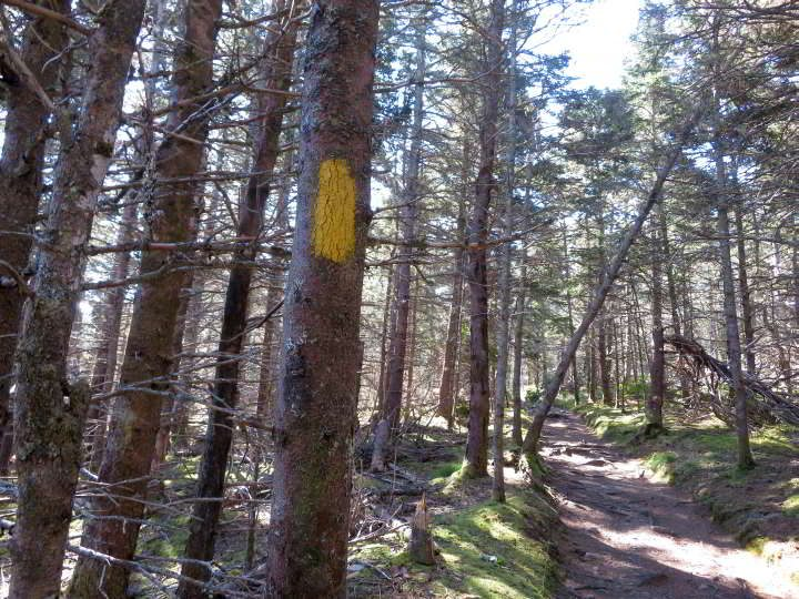 Yellow trail marker on a tree at Gaff Point hiking trail