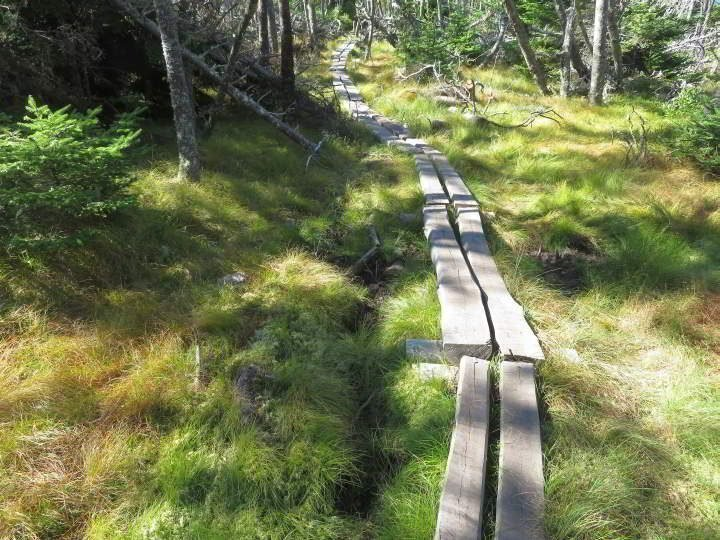 Gaff Point trail through the forest along a timber boardwalk