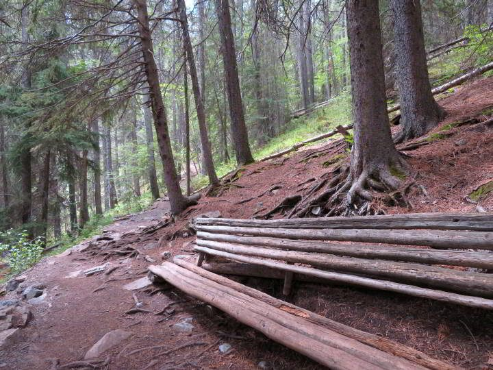 Bench made from fallen trees at Grassi Lakes Trail Kananaskis Alberta