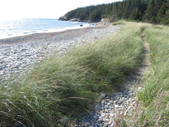 Grassy trail near the forest at Hirtle's Beach Gaff Point trail South Shore Nova Scotia best hike