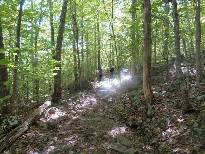 Hiking through the woods of Megunticook trail at Camden State Park