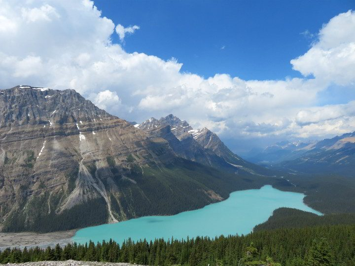 Turquoise color and shaped like a fox, Peyto Lake is a memorable landmark