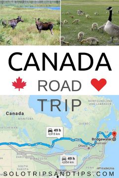 Canada road trip map and Moose and Canada Geese