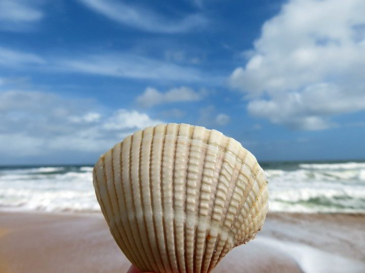 Seashell with beach backdrop at South Ponte Vedra Beach FL