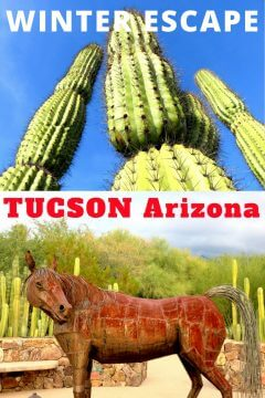 Winter escape to Tucson Arizona