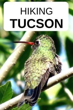 Hiking Tucson Arizona - hummingbirds common sight