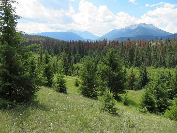 Mountains and meadows at Valley of the Five Lakes hike in Jasper National Park