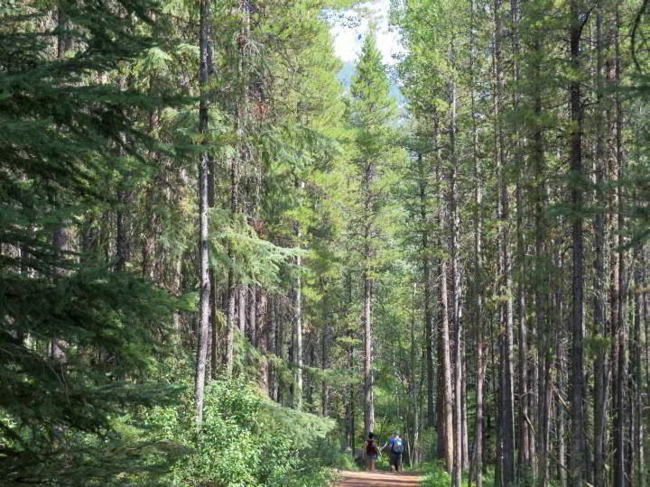Hikers start out on the trail at Troll Falls through the forest near Kananaskis Village in Alberta Canada