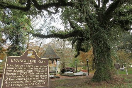 The Legend of the Evangeline Oak in St Martinville Louisiana