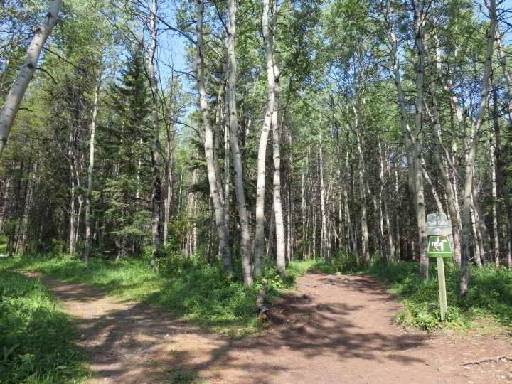 Troll Falls hiking trail is used by hikers and horseback riders in Kananaskis Alberta