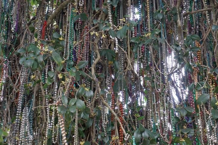 Dozens of colorful beads of Mardi Gras past hang from a tree along the parade route in Lafayette LA