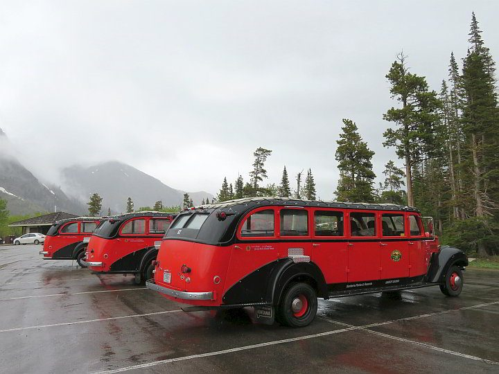 Historic Red Bus Tours at Glacier National Park - all vehicles are from the 1930's